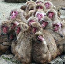 小豆島銚子渓自然動物園お猿の国の「サル団子」=25日、香川県土庄町
