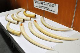 国内の違法取引事件で警視庁が押収した象牙=2017年8月