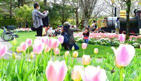 色とりどりの花が来場者の目を楽しませている春のフローラル祭=9日午後、宮崎市・フローランテ宮崎