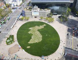 ソウル市庁前の広場にお目見えした、白い花を並べ描かれた朝鮮半島=19日(共同)
