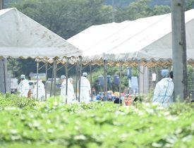 豚コレラの発生が確認された養豚場の近くで、殺処分作業の準備を進める県職員ら=17日午後1時55分、揖斐郡揖斐川町