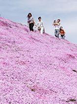 北海道大空町の「東藻琴芝桜公園」で見頃を迎えたシバザクラ。色鮮やかな斜面を観光客らが楽しんでいた=19日午後