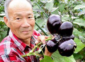 渡辺さんが収穫した1本の茎から四つの実をつけた三豊ナス=観音寺市大野原町