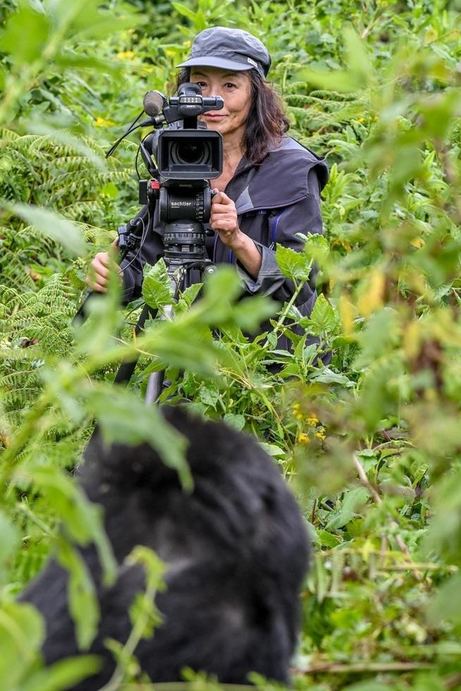 ルワンダ北西部・火山国立公園で最大数を誇るゴリラの群れの若い雄を撮影する森啓子。5年をかけて観察し生態を知り尽くした森は、これまで誰も撮影したことがない雄同士の格闘を撮りたいと願っている(撮影・中野智明、共同)