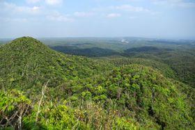 「やんばる国立公園」に編入される米軍返還地(環境省提供)