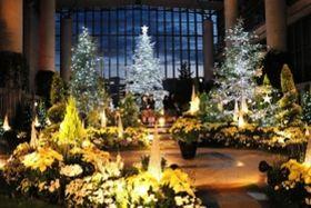 巨大ツリーと優しく照らされた白い花々がロマンチックなメイン展示=奇跡の星の植物館