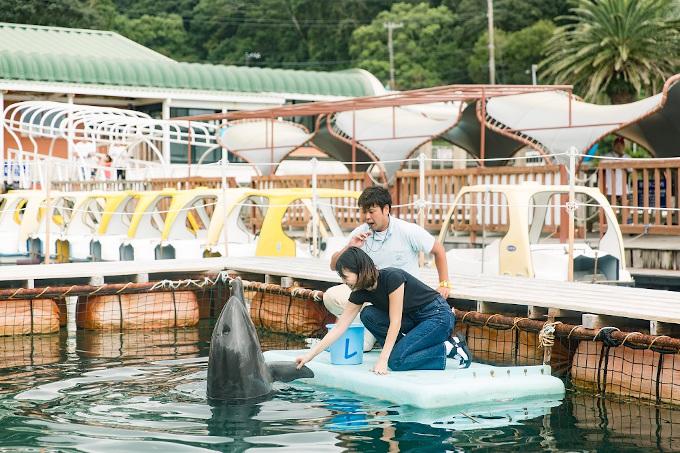 イルカと至近距離での触れ合い。トレーナーから技のサイン出しを習うことができる(下田海中水族館