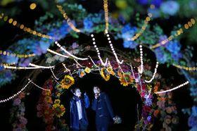 色とりどりの花が浮かび上がった「そらの花畑世羅高原花の森」のライトアップ(撮影・井上貴博)