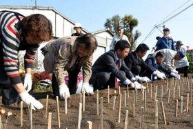 金田一畑にブラックチャームの球根を植え付ける参加者