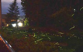 南箕輪村田畑の半沢で舞うホタル=12日午後8時59分、約30秒間露光