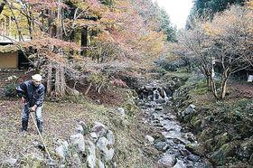 紅葉した木々の周辺で草刈りを続ける伊藤さん=羽咋市酒井町の永光寺