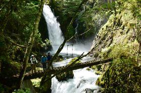 新緑や滝を楽しむ入山者
