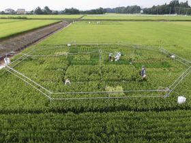 イネの栽培実験をした茨城県つくばみらい市の農場。パイプで囲み、二酸化炭素を供給して濃度を調整する(農業・食品産業技術総合研究機構提供)
