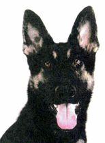 警察 犬 クレバ 逃げた警察犬クレバ号 全国から激励70件...