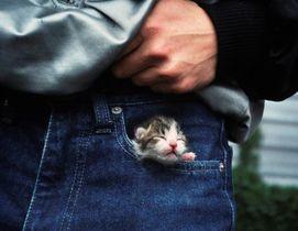 写真集の中の1カット、若手ジョッキーが保護した生まれたばかりの子猫