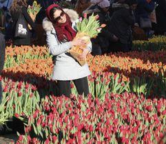 アムステルダムの王宮前広場を埋めたチューリップを楽しむ女性=19日(共同)