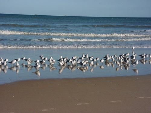 ハリケーンシーズンになると被害を受けることが多いフロリダ州・デイトナビーチ