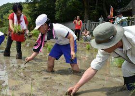 相川さん(左端)と一緒に赤米の苗を植える児童ら