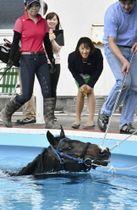 復帰を目指す競走馬の初泳ぎを視察する小谷実可子さん(右から2人目)=28日午後、福島県いわき市
