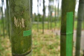 落書きされた竹=17日午後、京都・嵐山