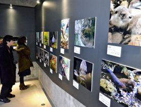 来館者が撮影した、カワセミ水族館の生き物写真コンテストの作品が並ぶ館内