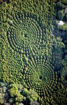 飫肥杉が同心円状に並び、「ミステリーサークル」と呼ばれるようになった試験林=宮崎県日南市北郷町(本社ヘリから)