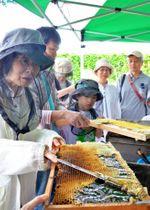 採蜜作業を体験する参加者=鹿児島市のマルヤガーデンズ