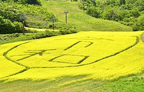 地域の話題となっている三ノ倉高原菜の花畑に現れた新元号「令和」=喜多方市熱塩加納町