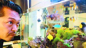 野村さんが阿南の海で捕獲した熱帯魚を入れた水槽=阿南市富岡町のホテルサンオーシャン