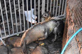 体を寄せ合ってじゃれ合う「ぼたん」と「ひまわり」=箱根園水族館