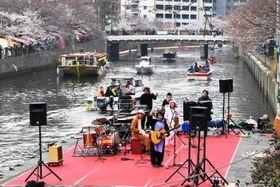 多くの船が行き交う中、台船を使ったライブが開かれた大岡川桜まつり=横浜市中区の大岡川桜桟橋