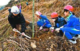 桜の苗木を植える児童=那賀町横石