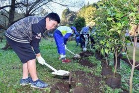 「出の山公園」に植樹する小学生=小林市南西方