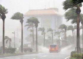 強風で揺れる海沿いの街路樹=奄美市名瀬