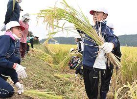 鎌を手に、もち米を収穫する福地小の児童たち