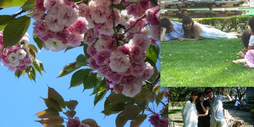 彼女が撮った八重桜と撮影現場の私たち 「この時の空気の香りまでもが伝わり癒される」と彼女は言う