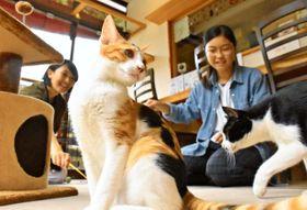 捨て猫や野良猫の新たな飼い主を探す「うたたね」の店内=9月、宮崎市北川内町