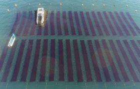 ノリを収穫する潜り船=19日午前8時15分、玉野市・胸上港沖(小型無人機から)