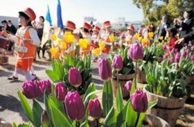 色鮮やかなチューリップ。オープニングで園児がマーチングを披露した=洲本市民広場
