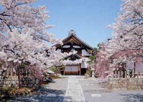 サクラの隠れた名所として知られる妙顕寺(昨年撮影、同寺提供)