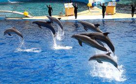 フランス南部カンヌ近郊の水族館で、ショーを披露するイルカ=2016年3月(ロイター=共同)