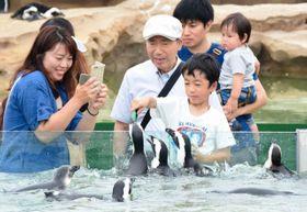 ープペンギンに餌をあげる来場者ら=神戸市中央区港島南町7