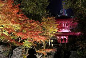 ライトアップされ、夜の境内に浮かび上がる紅葉と多宝塔(15日午後6時2分、大津市石山寺1丁目)