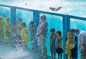 イルカの水しぶきを浴びる来園者=沼津市内浦長浜の伊豆・三津シーパラダイス