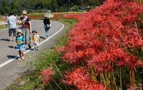 ヒガンバナを眺めながら散策を楽しむ親子連れ=さつま町柊野