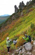 色づき始めた黒岳9合目「マネキ岩」周辺の紅葉=11日
