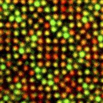 原子を色分けして観察した像。それぞれの色は異なる原子を表す(名城大の飯島澄男終身教授提供)