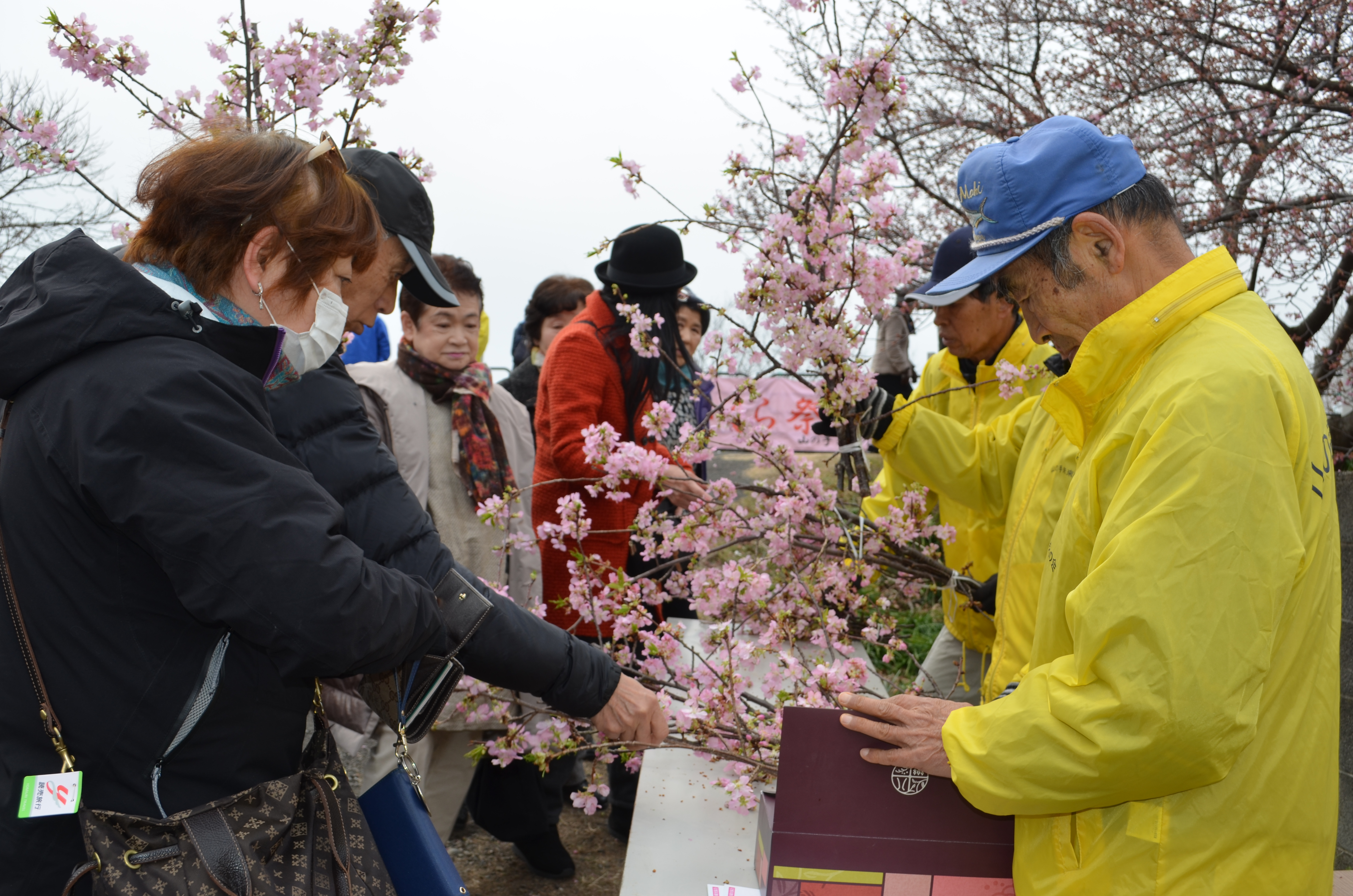 手入れで伐採し、室内で温度管理していた河津桜の枝の販売会。開始1時間で完売した=2月25日、焼津市関方