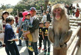 観光客でにぎわう高崎山自然動物園。10連休も人気を集めそう=3月、大分市