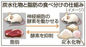 炭水化物と脂肪の食べ分けの仕組み(イメージ)